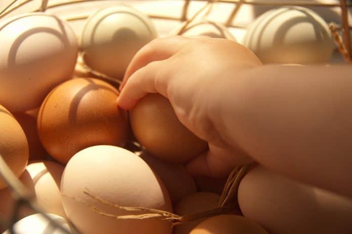 Куриным яйцам сложно найти альтернативу среди яиц других птиц