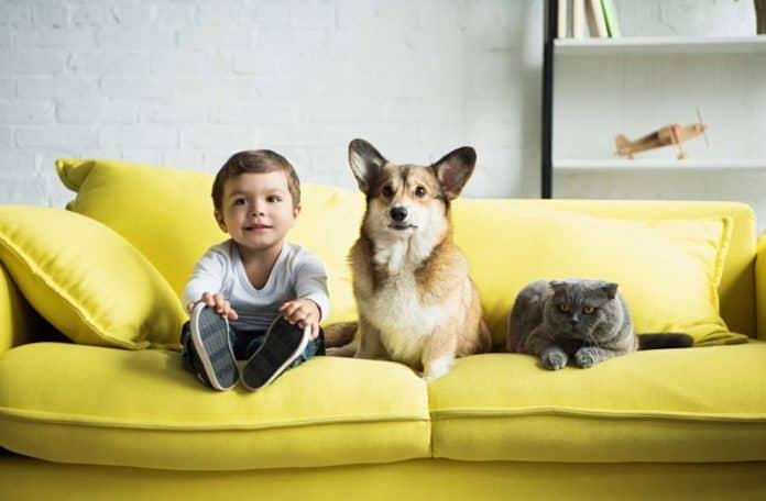 Аллергия на собак и котов: симптомы, лечение, профилактика