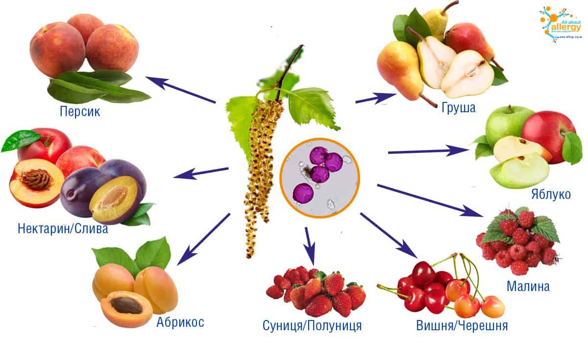 _береза-фрукти