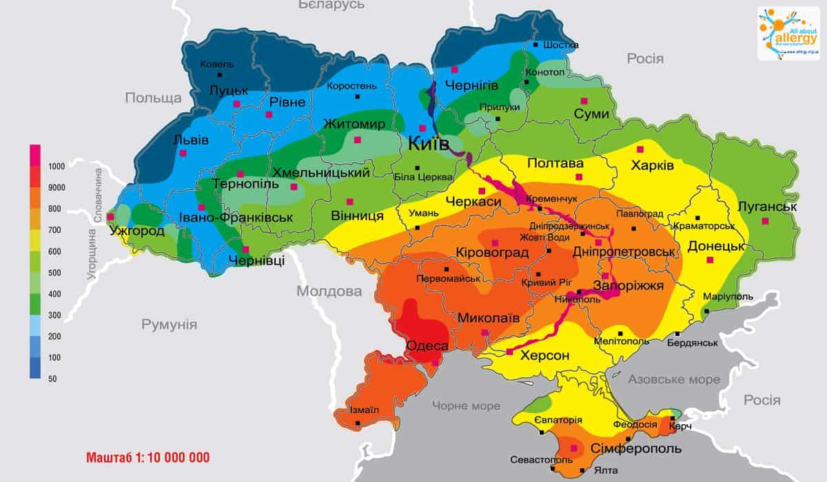 Аллергия на амброзию: карта концентраций пыльцы в Украине