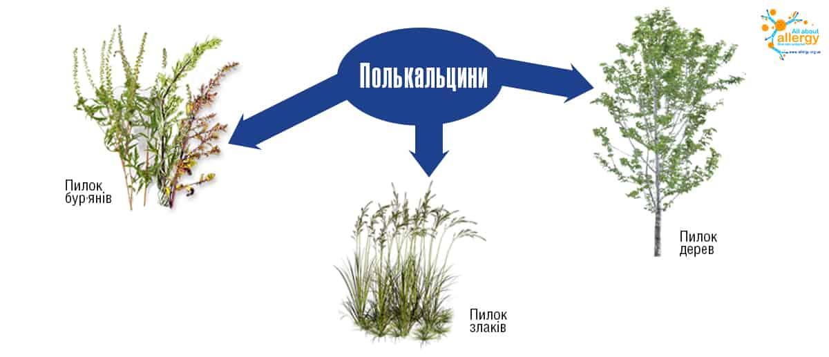 Полькальцини