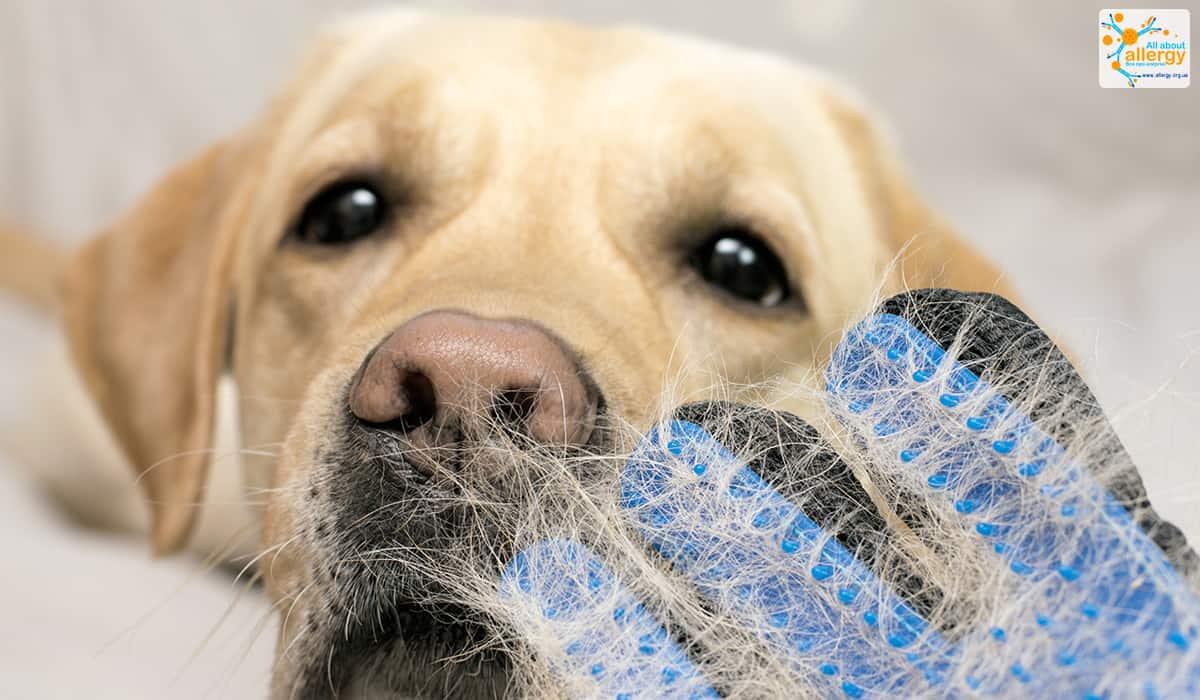dog-allergy