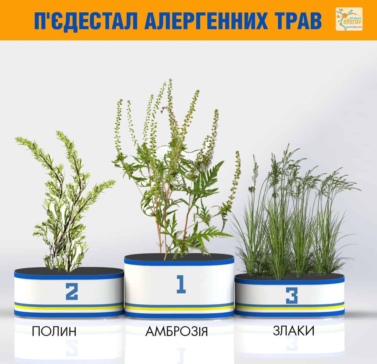Аллергія на траву − найпоширеніші алергени