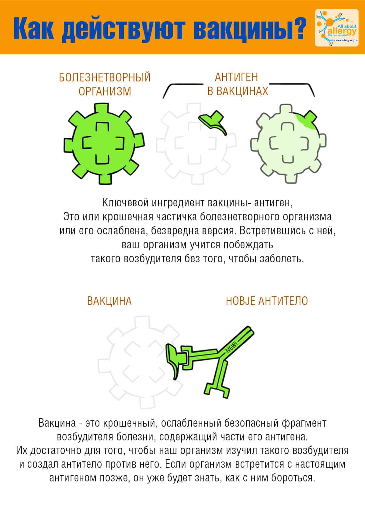 Вакцина от коронавируса как работает