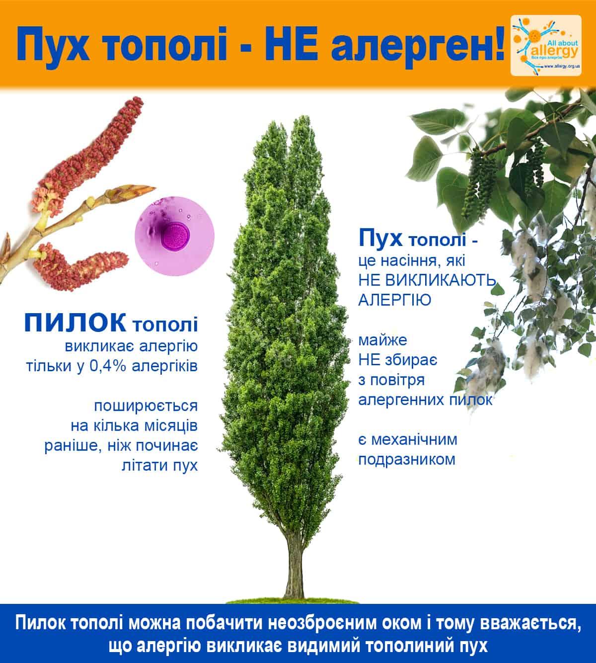 Міфи про алергію. Тополиний пух