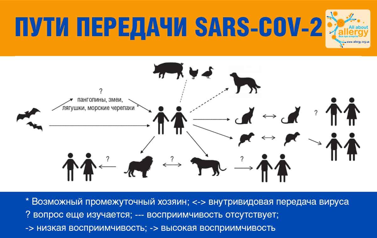 Люди и коронавирусы животных